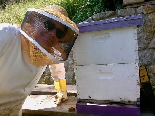 Man in bee suit and bee hive