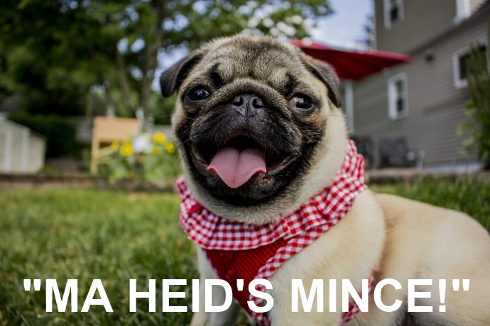 """A pug with the quote """"Ma heid's mince!"""""""